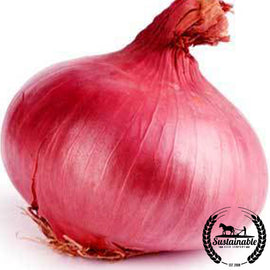 Red Burgundy Onion Seeds - Non-GMO