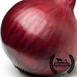 Red Creole Onion Seeds - Non-GMO