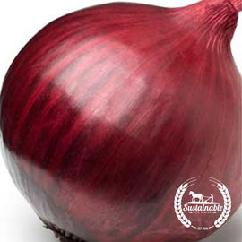 Ruby Onion Seeds - Non-GMO