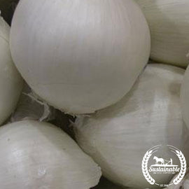 Southport White Globe Onion Seeds
