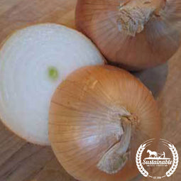 Yellow Sweet Spanish Onion Seeds - Non-GMO