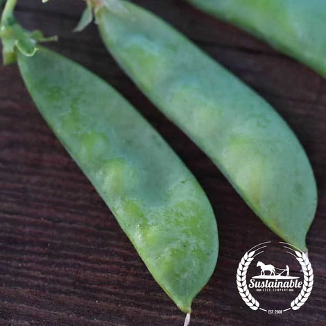 Oregon Sugar Pod II Pea Seeds - Non-GMO