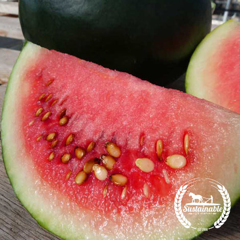 Organic Blacktail Mountain Watermelon Seeds - Non-GMO