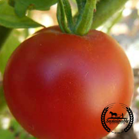 Organic Boxcar Willie Tomato Garden Seeds