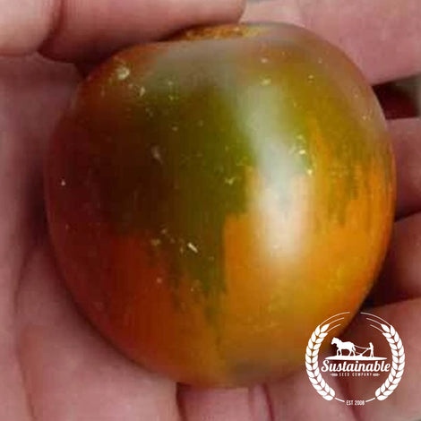 Organic Brown Bear Tomato Garden Seeds
