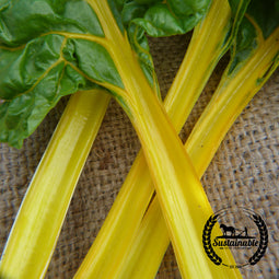 Organic Canary Yellow Swiss Chard Seeds