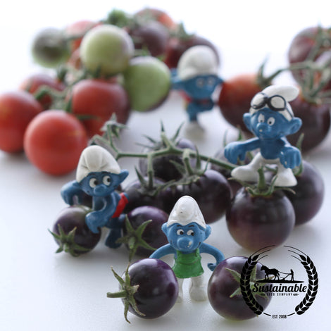 Organic Dancing With Smurfs Tomato Seeds