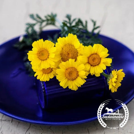Organic Double Garland Chrysanthemum Flower herb Seeds