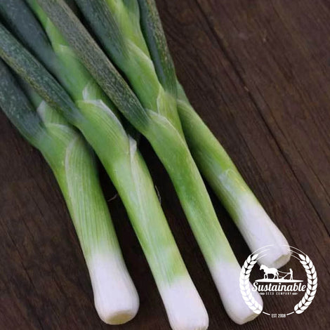 Organic Flagpole Scallion Seeds