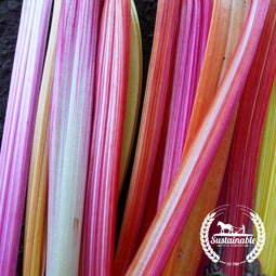 Organic Flamingo (Pink) Swiss Chard Seeds