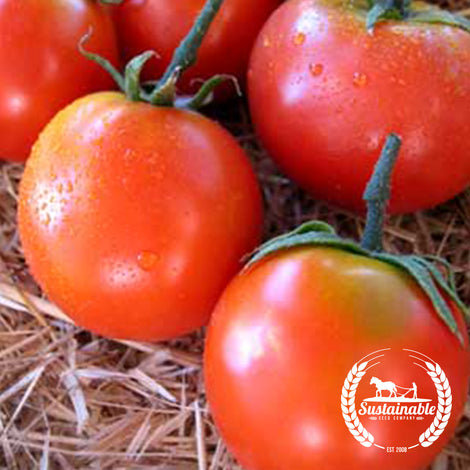 Organic Forest Fire Tomato Seeds