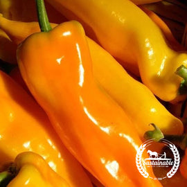 Organic Gatherers Gold Sweet Italian Pepper Seeds