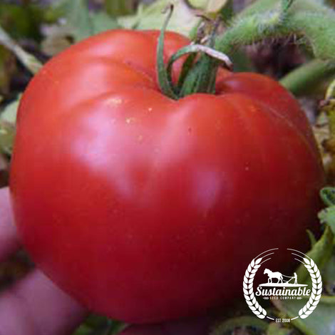Organic Gill's All Purpose Tomato Seeds