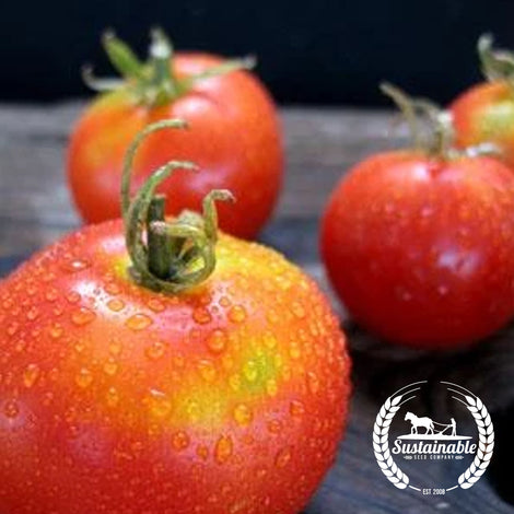 Organic Glory of Mechelen Tomato Seeds