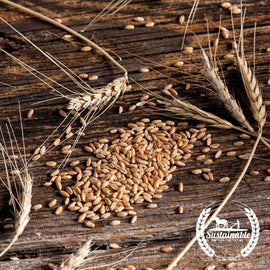 Organic Hard Red Winter Wheat Grain Seeds