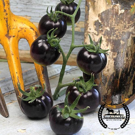 Organic Helsing Junction Blue Tomato Seeds