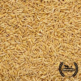 Organic Hulless Oat Grain Seeds