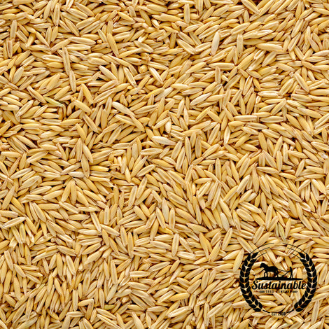 Organic Hulless Oat WIR 4075/14 Seeds - Non-GMO