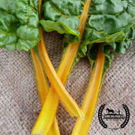 Organic Oriole Orange Swiss Chard Seeds