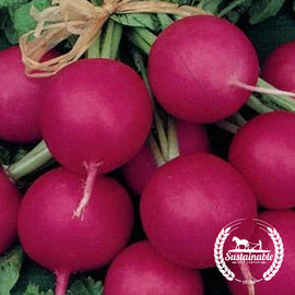 Organic Pink Beauty Radish Seeds