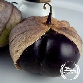 Organic Purple Tomatillo Seeds - Non-GMO