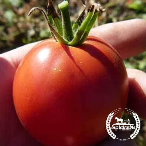 Organic Red Heart Tomato Seeds