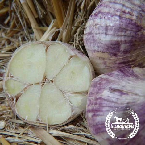 Organic Red Toch Garlic Seeds - Non-GMO