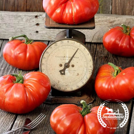 Organic Top Sirloin Tomato Vegetable Seeds