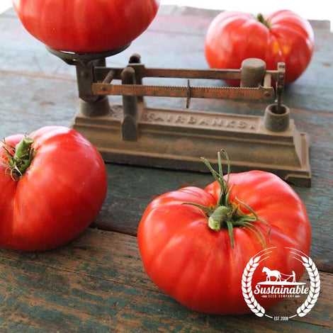Organic Ultimate Giant Tomato Seeds