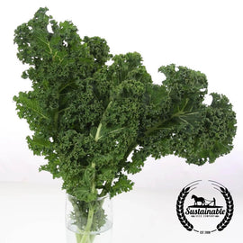 Organic Vates Blue Curled Kale Seeds