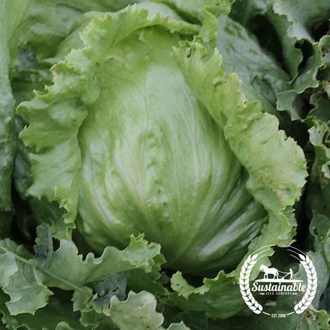 Organic Winter Supreme Lettuce Seeds