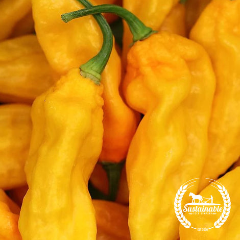 Organic Yellow Ghost Pepper Seeds
