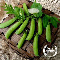 Sugar Ann Snap Pea Garden Seeds