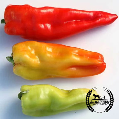 Giant Aconcagua Pepper Seeds