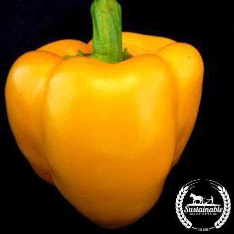 Organic Golden Calwonder Pepper Seeds