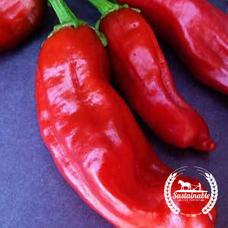 Organic Italian Pepperoncini Pepper Seeds