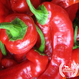 Organic Jimmy Nardello Pepper Seeds - Non-GMO
