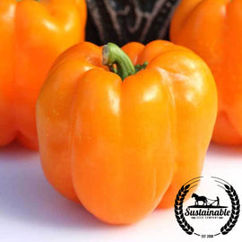Orange King Bell Pepper Seeds