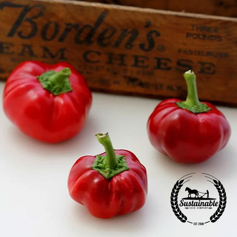 Red Cheese Pepper Seeds - Non-GMO