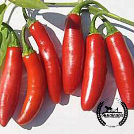 Serrano Tampiqueno Hot Pepper Seeds - Non-GMO