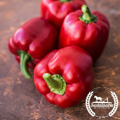 Organic Wisconsin Lakes Pepper Seeds - Non-GMO