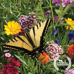 Pollinator Mix - Butterfly Feed Seed - Non-GMO