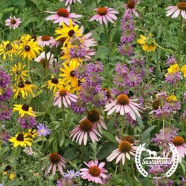 Pollinator Mix - Eastern Flower Seeds - Non-GMO