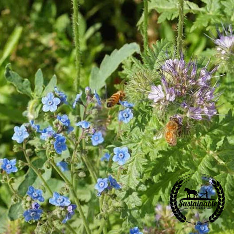Pollinator Mix - Honey Bee Mix Seeds - Non-GMO
