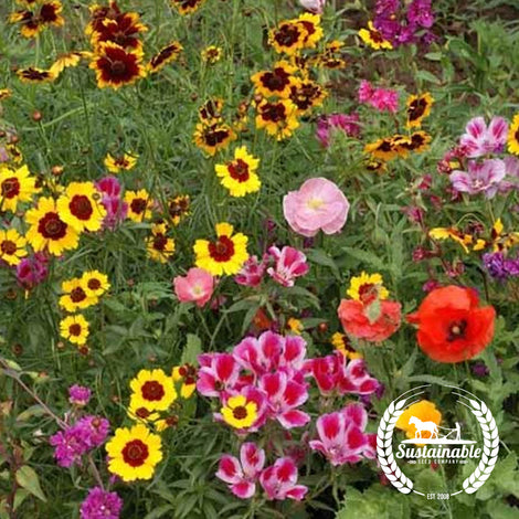 Pollinator Mix - Western Flowers Mix - Non-GMO