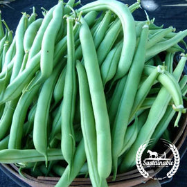 Organic Provider Bush Bean Seeds