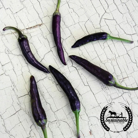 Purple Cayenne Peppers Seeds - Non-GMO