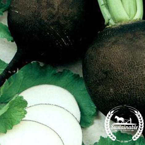 Organic Black Spanish Round Radish Seeds