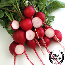 Crimson Giant Radish Seeds