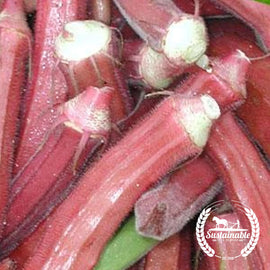 Red Burgundy Okra Seeds - Non-GMO